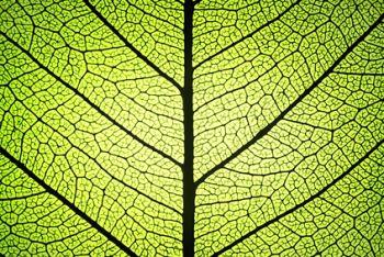 8 choses à connaître pour se protéger des énergies négatives 20130226100304_Photosynthese_-_Foitestro_-